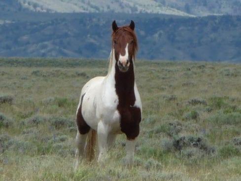 Average Hiker Wyoming Stallion