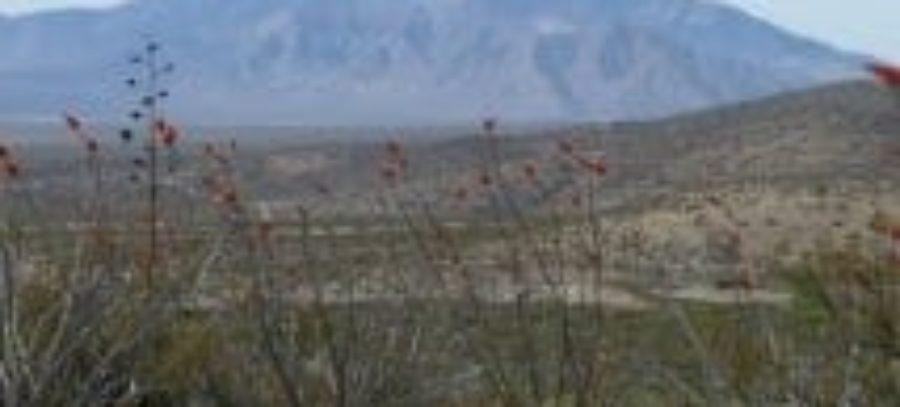 cdt-desert