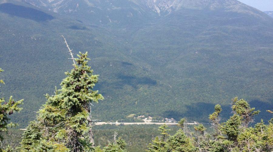 Gondola Rides and Angled Bear Sleep