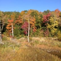 Near Appalachian Trail