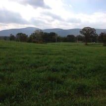 Appalachian Trail in CT