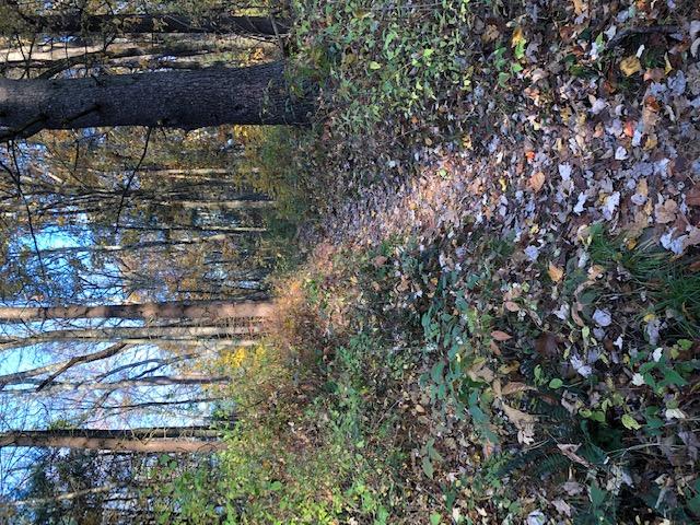 Appalachian Trail Fall Hike