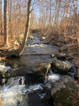 Stream before Mt. Egbert