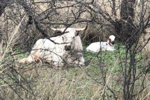 AZT Day 2 – Trail Journal| Average Hiker