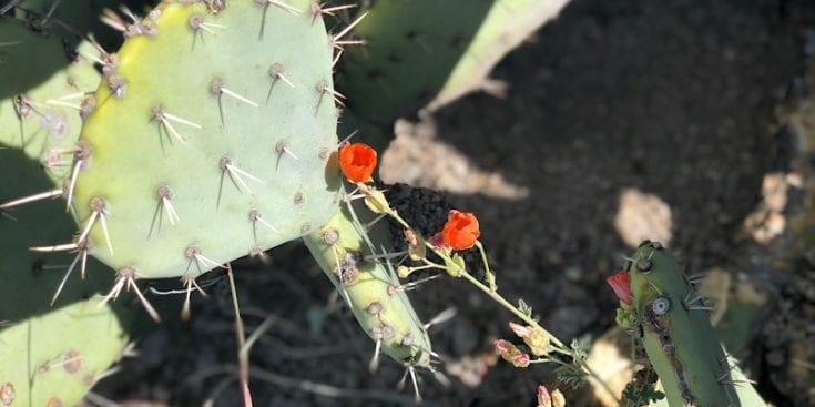 Delicate Desert Flowers