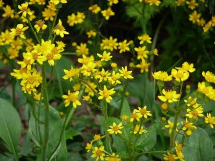 banded-peak-valley-flowers