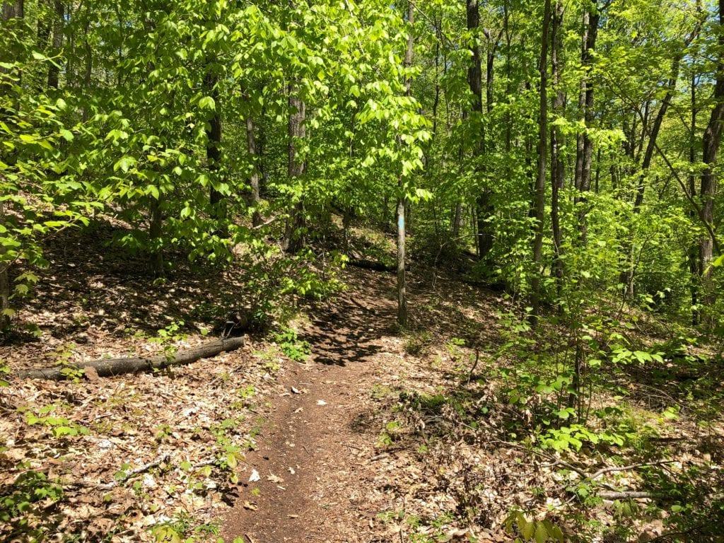 mattabesett net nice trail