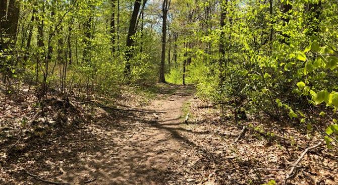 nice broad trail on the mattabesett NET