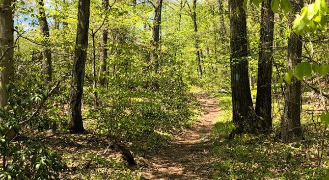 NET trail