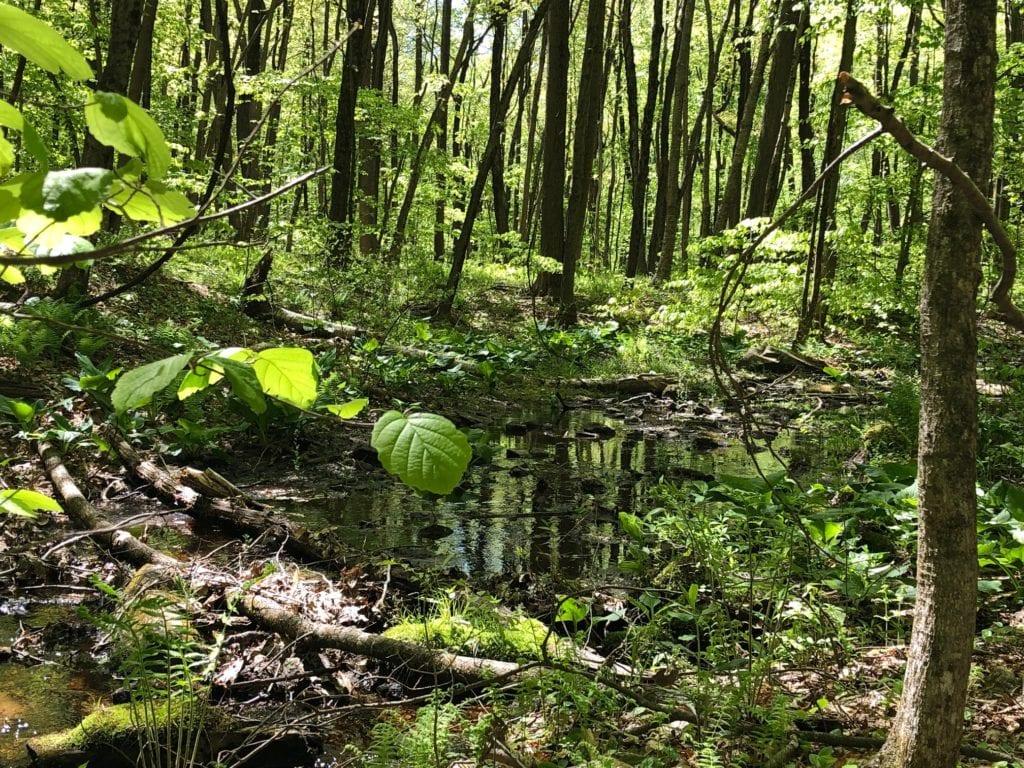 net mattabesett creek section