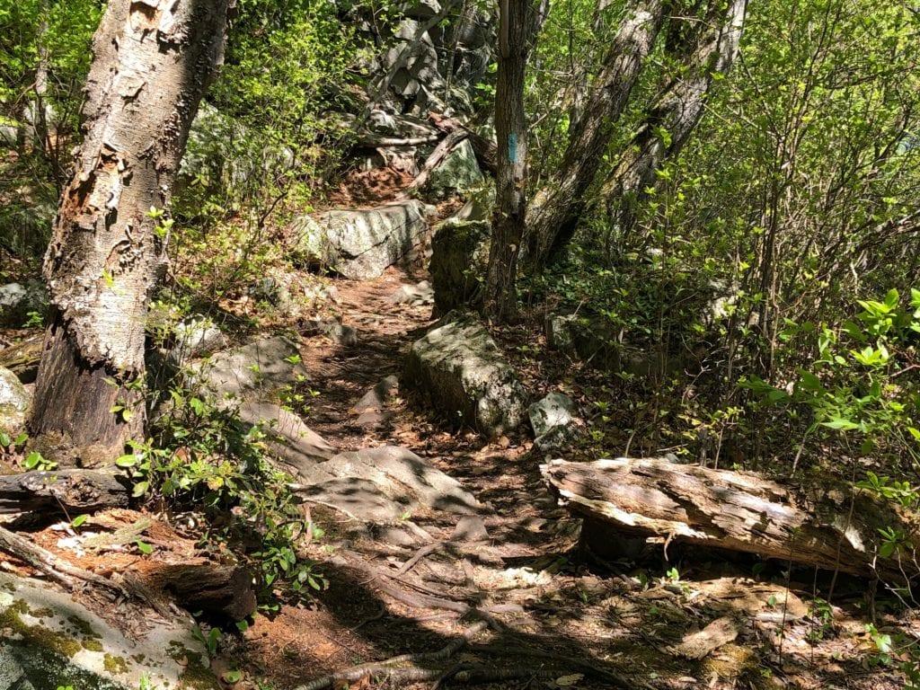 net mattabesett rocks and roots