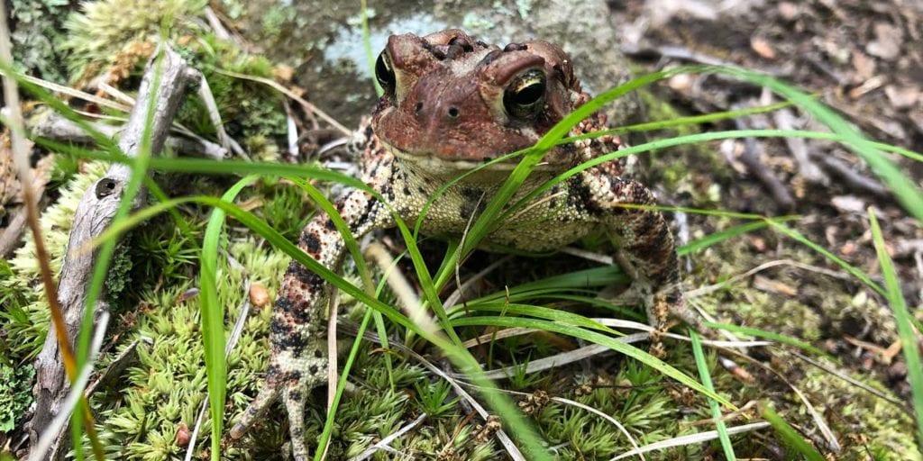 net menunkatuck frog friend section 08