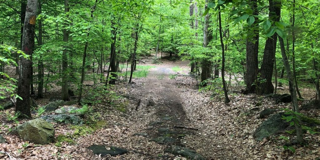 new england trail in rockland preserve