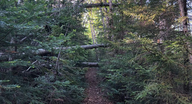 desolation loop cedar brook blow downs