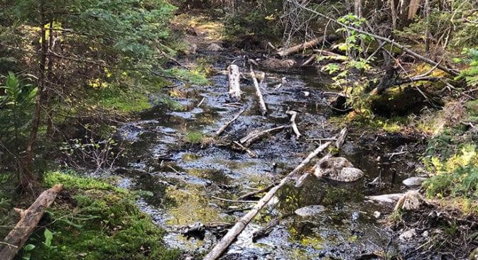 bogs along cedar brook
