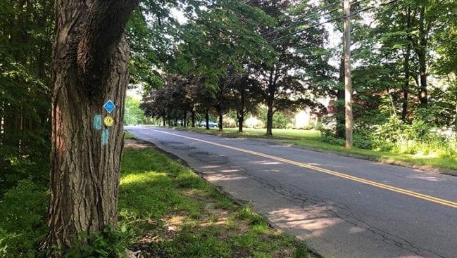 atkins road