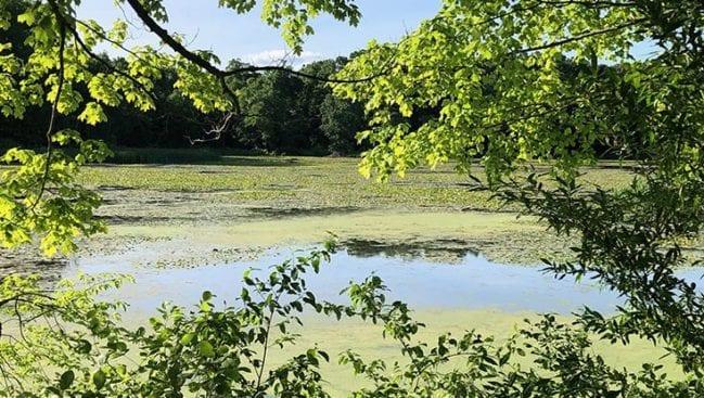 new england trail along highland pond