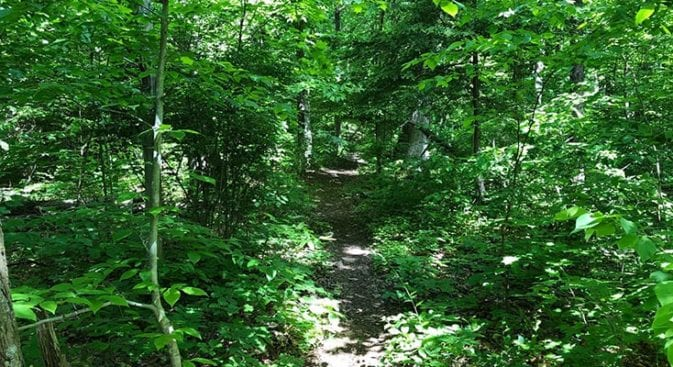 beginning of trail on section 10