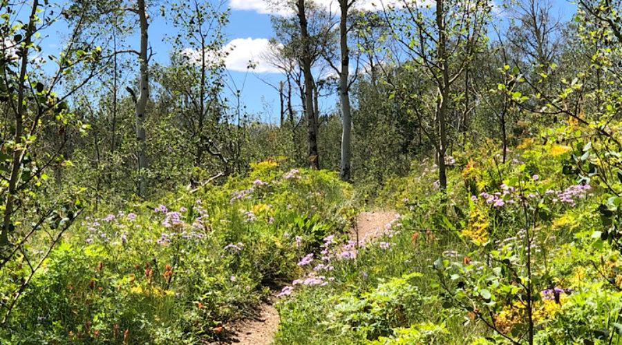 Colorado Trail Day 4 – Kenosha Pass | Average Hiker