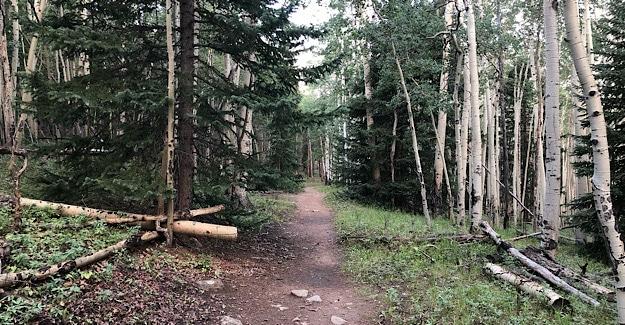 Hiking through Colorado Aspens