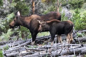 Colorado Trail Days 6 & 7 | Average Hiker