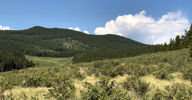 High meadows on the Colorado Trail