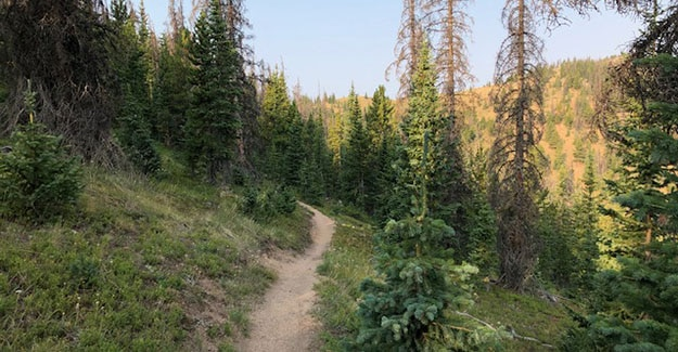 Backpacking just out of Monarch Pass along the Colorado Trail