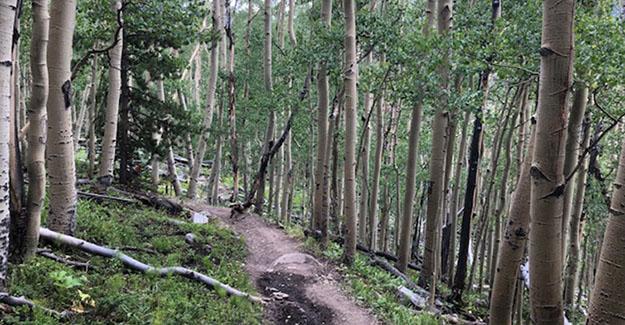 Average Hiker in Aspen Grove Near Cottonwood Pass