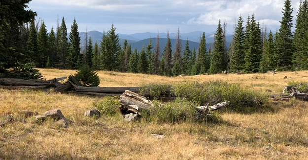 Views Near Monarch Pass