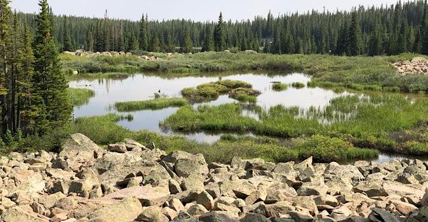 Marshy Area in Holy Cross Wilderness
