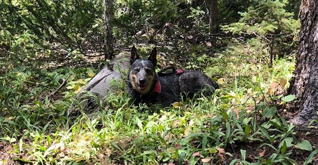 Shy Dog on Break near Indian Creek Trailhead