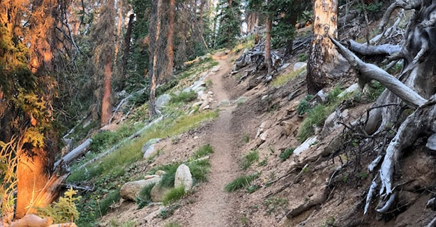 Switchbacks Up from Chalk Creek Backpacking on the Colorado Trail