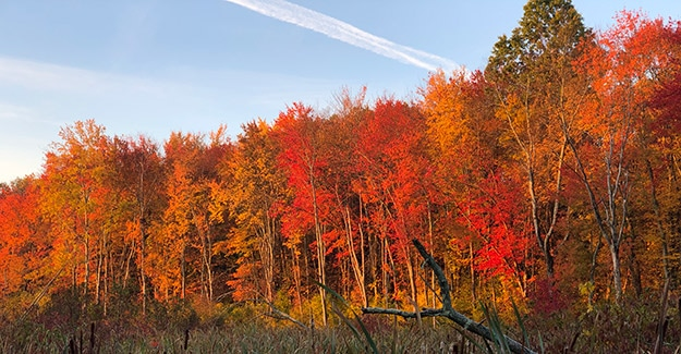 new england trail fall foliage average hiker