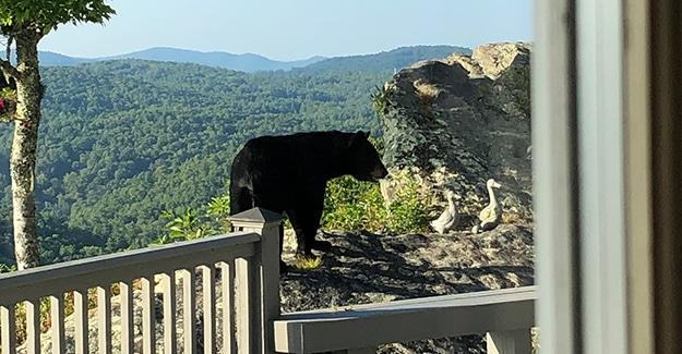 black bear encounter in north carolina