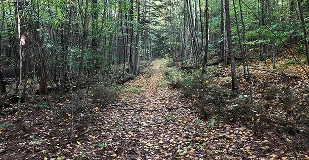 Faint New England Trail
