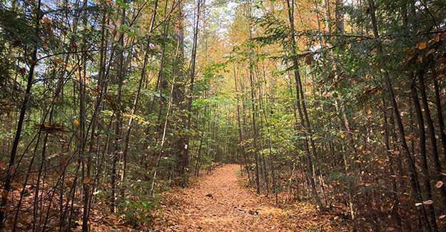 Fall Hiking on the New England Trail