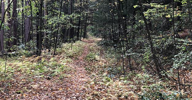 Dark Forest Trail on Ridge