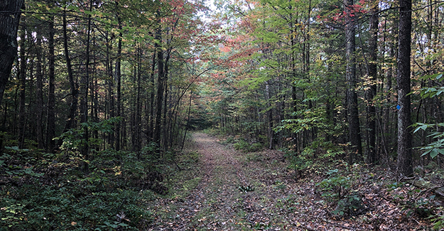 More Unused Trail Near Amherst