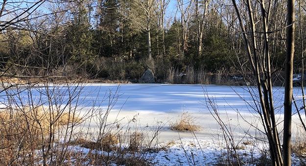 Early Morning on Fyler Pond