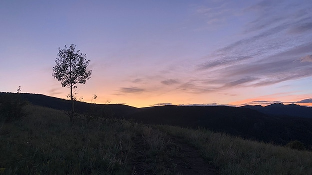 Lone Early Morning Tree on the Pacific Crest Trail