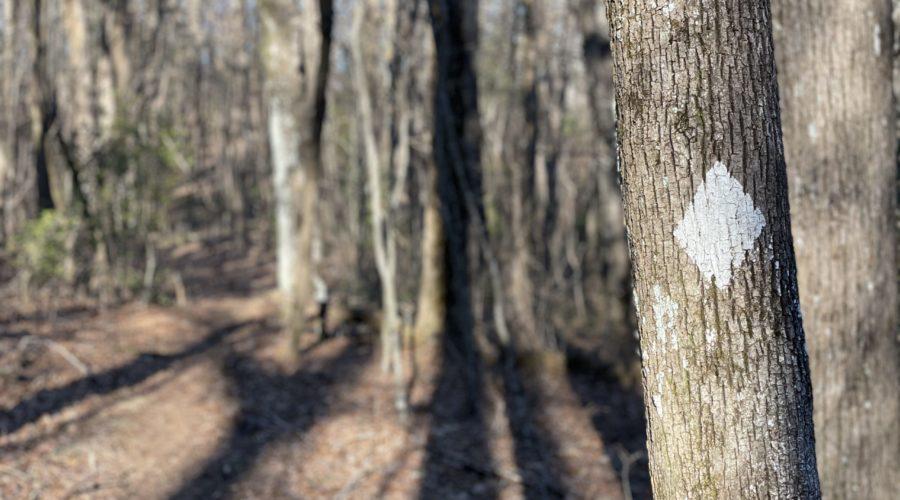 Benton Mackaye Trail – Day 1 – Hiking with Sam