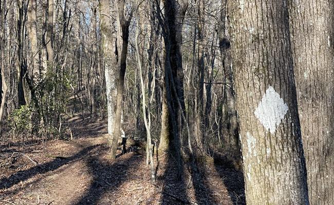 BMT Blaze on Trail