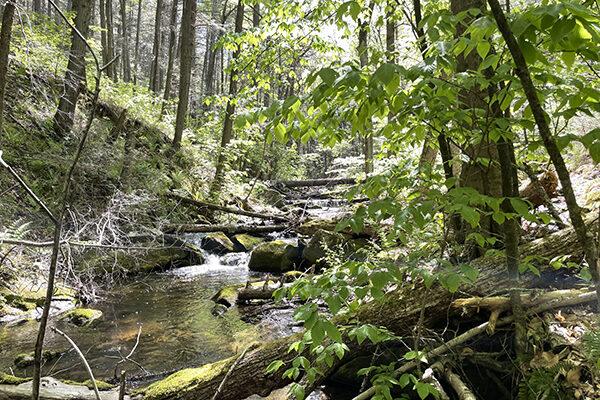 Dean's Ravine along trail