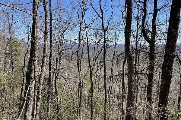 Ridge Views on the BMT