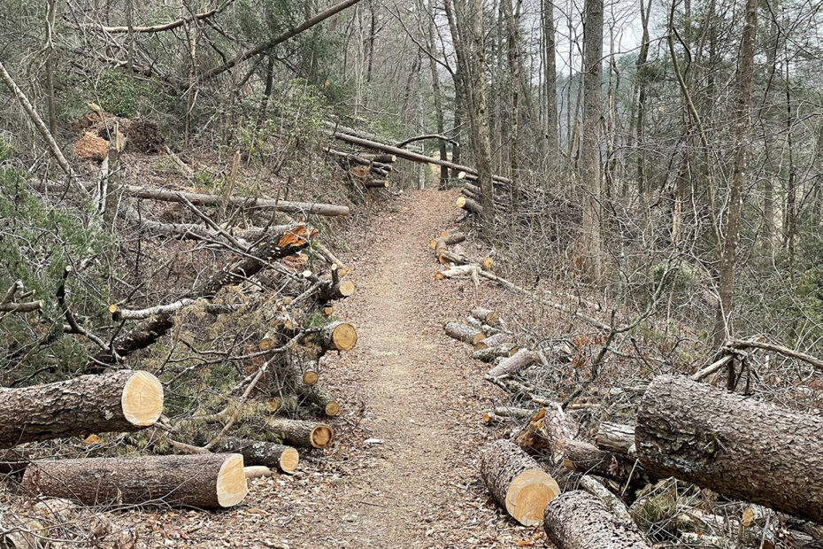 Trail Maintenance on the Benton Mackaye Trail outside Blueridge, GA